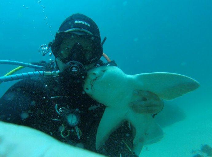 Este tiburón tiene la reacción más entrañable cada vez que ve a su buceador favorito