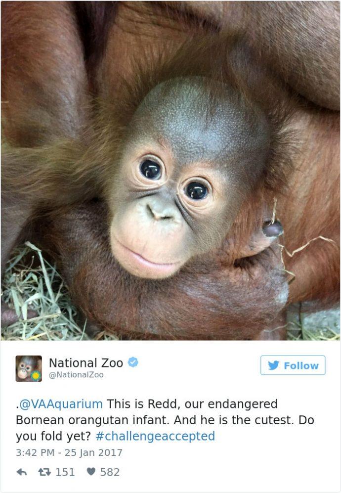 'Guerra de tweets de animales adorables': la última moda en las redes sociales