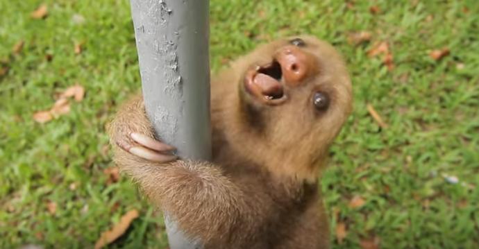 Observa a este bebé perezoso hablar y trata de no reírte