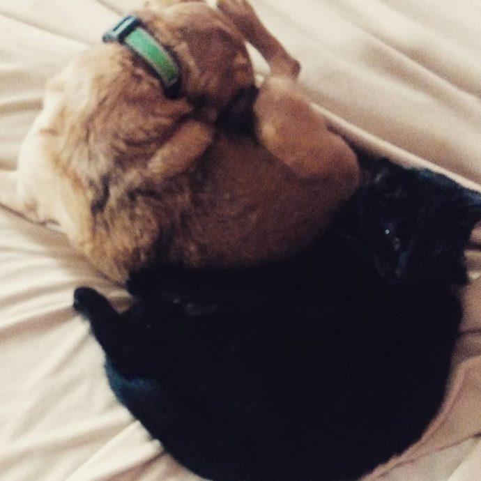 ¿Sabías por qué los perros lo lamen todo? Esta es su increíble respuesta