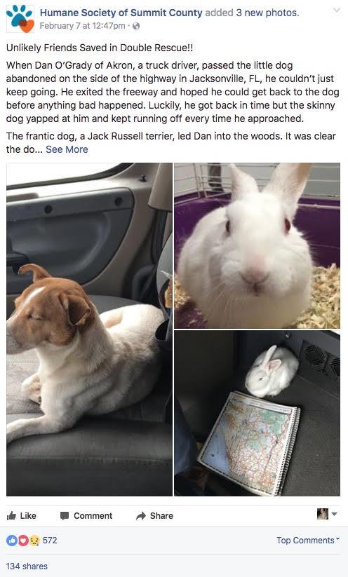 Se paró a un lado de la carretera para salvar a este pequeño perro que se encargó de guiarlo para salvar a su mejor amigo