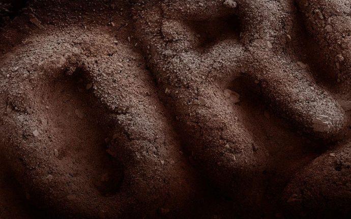 Descubre cómo se ve la comida a través del microscopio con estas increíbles imágenes