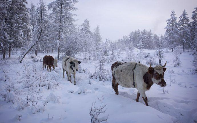 Este fotógrafo viaja a la aldea más fría de la tierra donde la temperatura puede alcanzar -71.2 °C