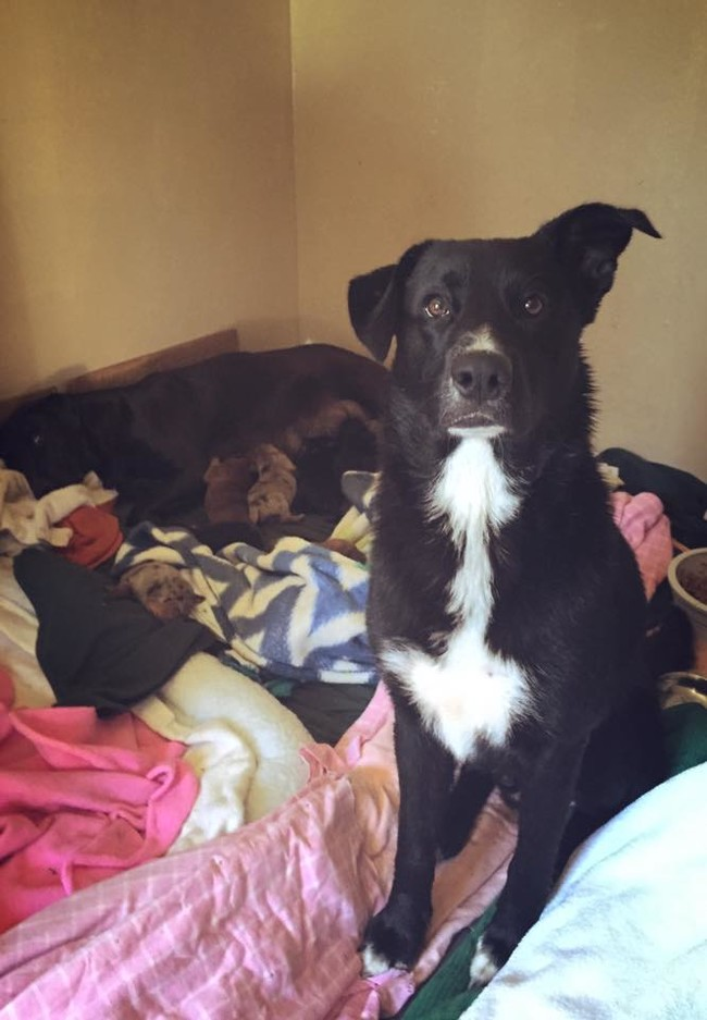 Un perro callejero que no quería ser rescatado muestra a sus rescatadores un secreto impresionante