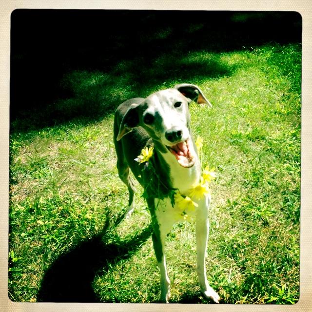 Un perro triste y deprimido es adoptado y realiza un viaje que cambia su forma de ver la vida