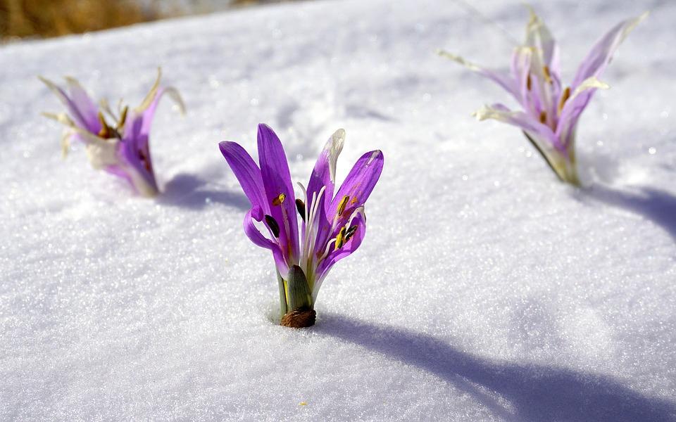 winter flowers 1200013 960 720