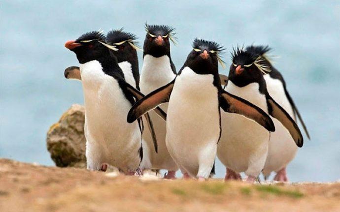 20 fotografías de animales que parecen la portada del Mejor Disco del Año