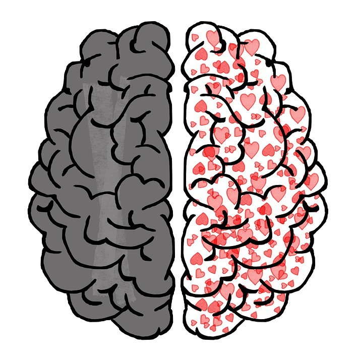 brain 2062045 960 720