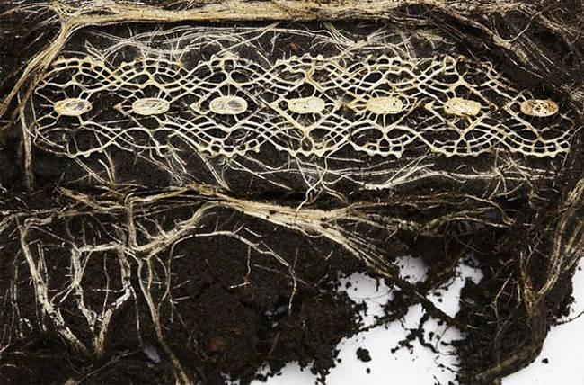 Complejas formas geométricas creadas con raíces de plantas
