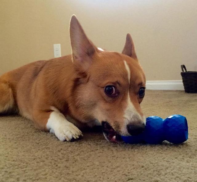Descubre cómo ayudar a los perros a permanecer menos tiempo en las perreras