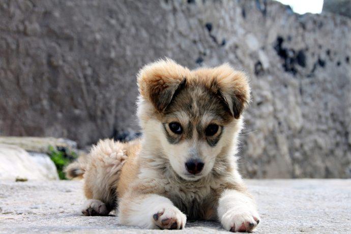 Descubre cómo hablar a los cachorros y perros para que te entiendan mejor