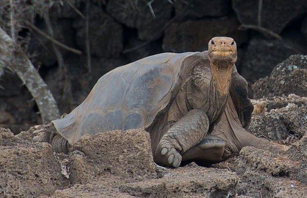 Descubre las 10 Cosas y animales más solitarios del planeta
