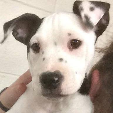 """Este perro que nació con un """"Selfie"""" en su oreja puede que sea el perro más especial que hayas visto nunca"""