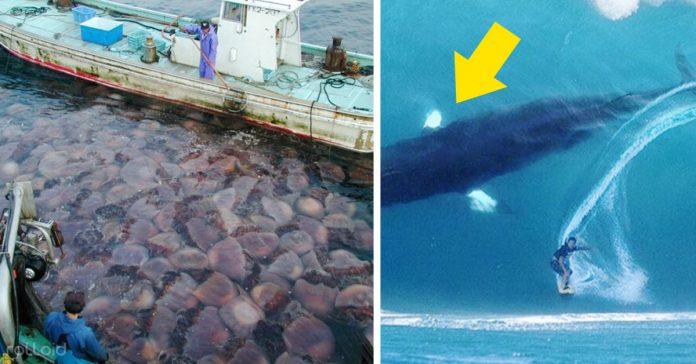 las cosas mas raras que los pescadores se hayan encontrado en alta mar banner
