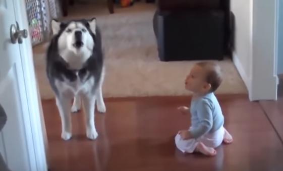Las 20 Situaciones más divertidas que ocurren cuando bebés y perros se quedan solos en casa