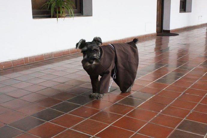 Un perro callejero disfruta su vida como monje después de ser adoptado por un monasterio