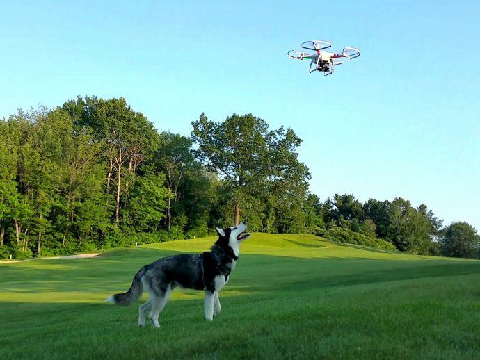 Un vecino aterroriza al perro de otro con un dron