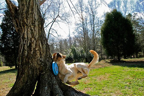 20 perros que se arrepintieron de haber tomado algunas decisiones en la vida