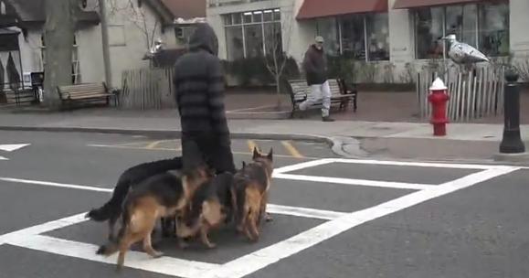 Se extiende por las redes el curioso vídeo de un hombre paseando a todos sus perros por la calle
