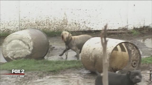 Hombres enmascarados torturan a un criador de perros
