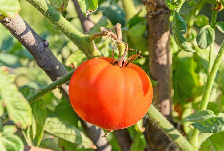 Cómo prevenir la artritis comiendo la fruta y verdura adecuada