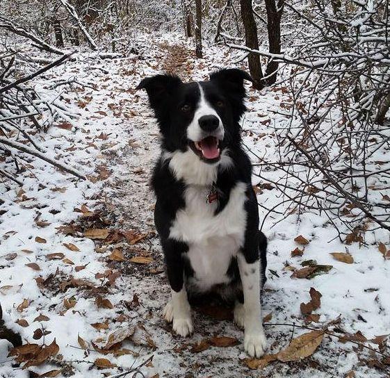 10 Razas de perros que son perfectas para ir a correr