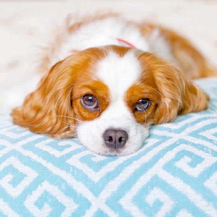 14 Razas de perro para las personas más vagas