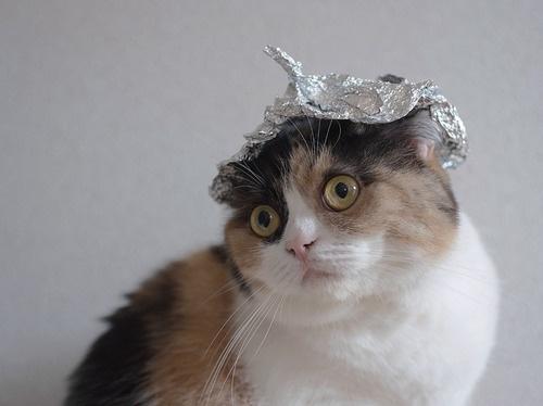20 Fotografías de gatos que están convencidos de que son humanos