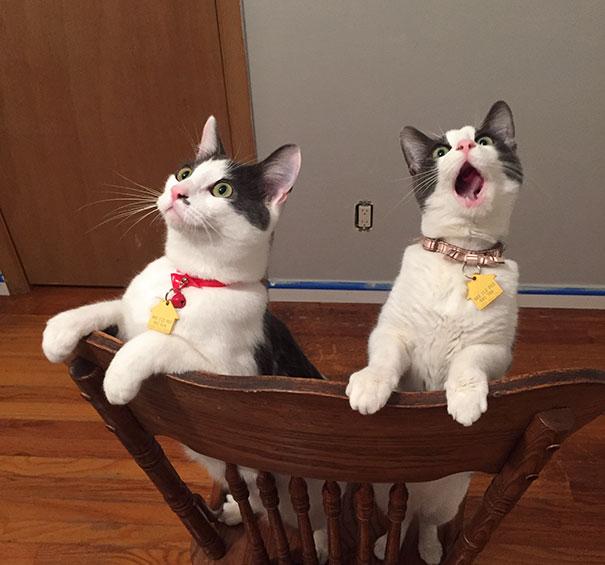20 gatos dramáticos que se merecen un Oscar