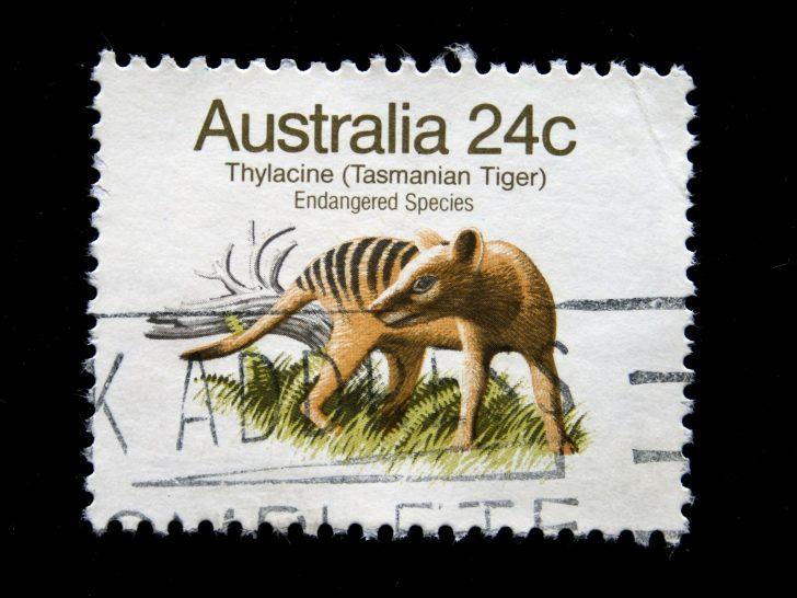 aparece un posible avistamiento de un ejemplar de tigre de tasmania 02
