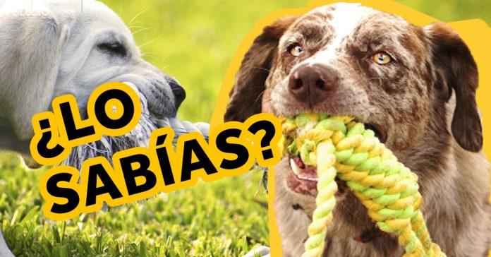 cuantas calorias pierdas al jugar con tu perro banner