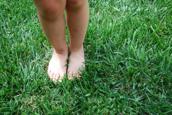 El truco para que tus plantas crezcan mejor y sin pesticidas