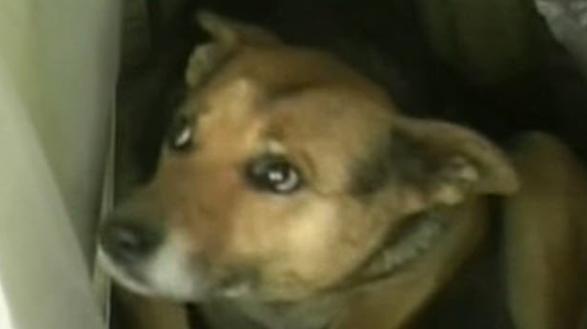 10 Increíbles historias de perros que llevaron a cabo rescates