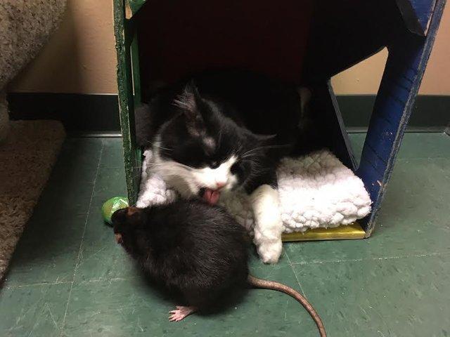 La amistad entre un perro, un gato y una rata sorprende al mundo entero
