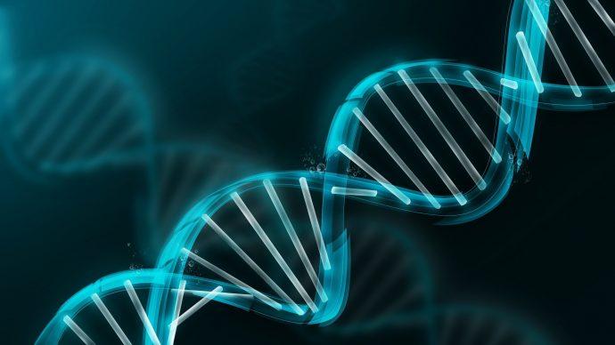 La ciencia descubre un gran misterio sobre los pulpos