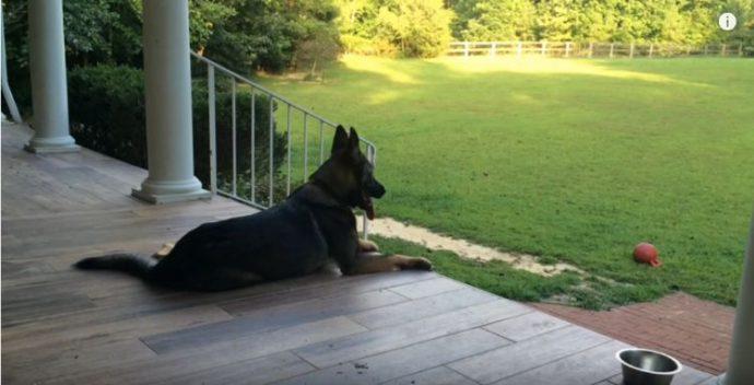 La madre le dice al perro que ha tenido un largo día. La respuesta del perro es buenísima