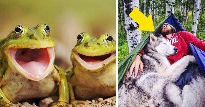 las mejores imagenes animales para empezar el dia banner