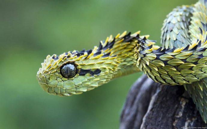 15 de las Serpientes letales más peligrosas sacadas de una película de terror