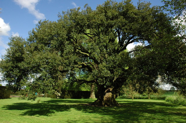 Los 10 árboles más importantes de Europa