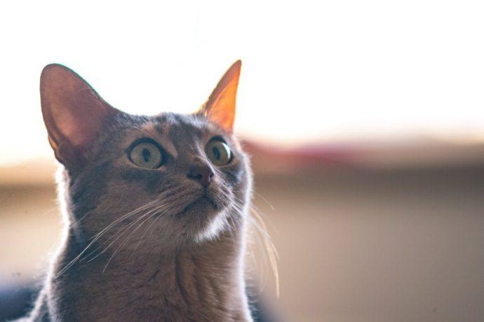 Los impresionantes poderes curativos del ronroneo de un gato