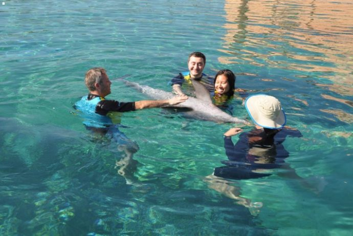 Nadar con los delfines no es tan bueno como todo el mundo cree