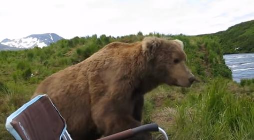 Un enorme oso pardo visitó a un campista y decidió quedarse con él