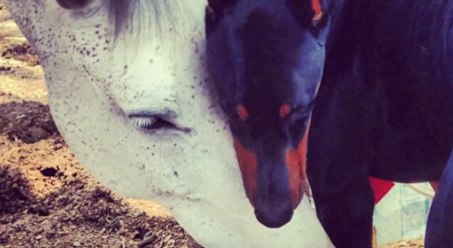 """Llaman a este perro """"el cuidador del caballo"""". Cuando veas lo que puede hacer, te quedarás alucinado"""