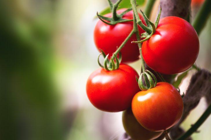 por que deberias comer tomates todos los dias 04