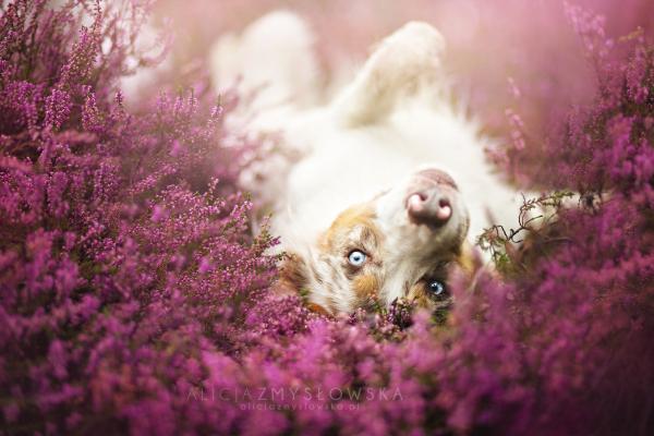 ¿Qué significado tiene soñar con perros?