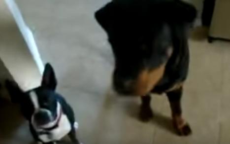 Ella le ofrece a su perro una recompensa que no le gusta. ¡Su reacción es absolutamente adorable!
