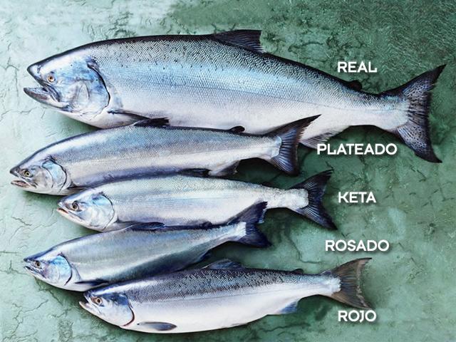 Cómo distinguir un salmón salvaje de uno de piscifactoría