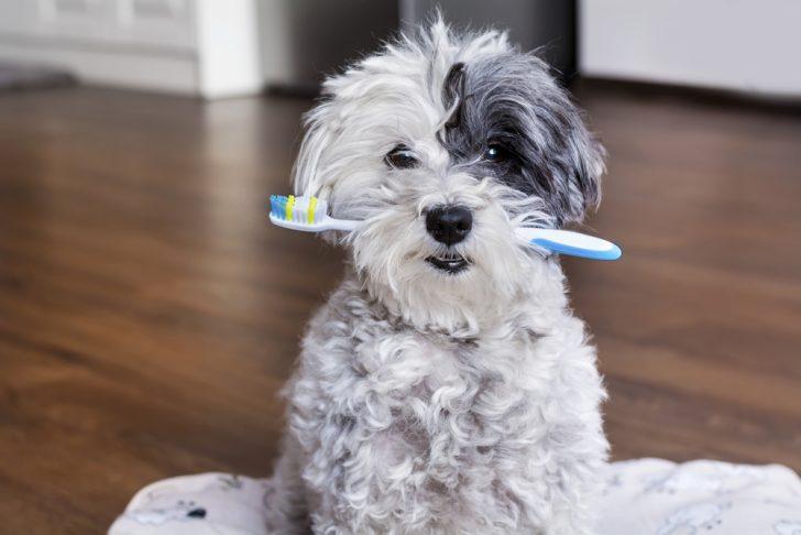 Trucos del cepillado de dientes necesarios para conseguir una sonrisa perfecta