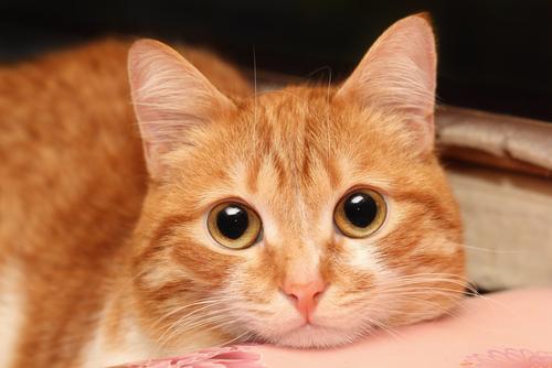 20 Imágenes que muestran por qué adoptar gatitos es la peor idea del mundo