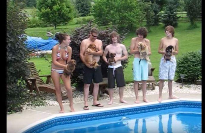 5 perritos se preparan para una carrera en la piscina. Presta especial atención al de la izquierda